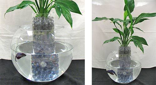 So much prettier than the old style betta fish planter for Peace lily betta fish