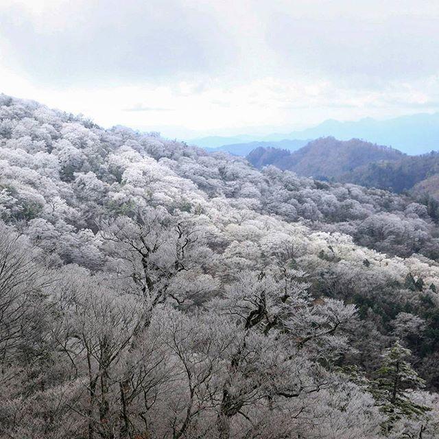 【haiirototoro】さんのInstagramをピンしています。 《〜7年前の立冬のころに〜 大台ヶ原の霧氷は 車道からもみることができます  11月にはいって 紅葉がすっかりおわってしまったころ 条件さえよければ 霧氷がみられるかもしれません  11月のおわりか12月のはじめには ドライブウェイが通行止めになってしまうので みられる期間はみじかいです  #大台ヶ原 #大台ケ原 #oodaigahara #霧氷 #rime #hoarfrost #forest #樹氷 #森 #forest #よしくま #冬 #winter #上北山村 #kamikitayama #奈良 #nara #japan》