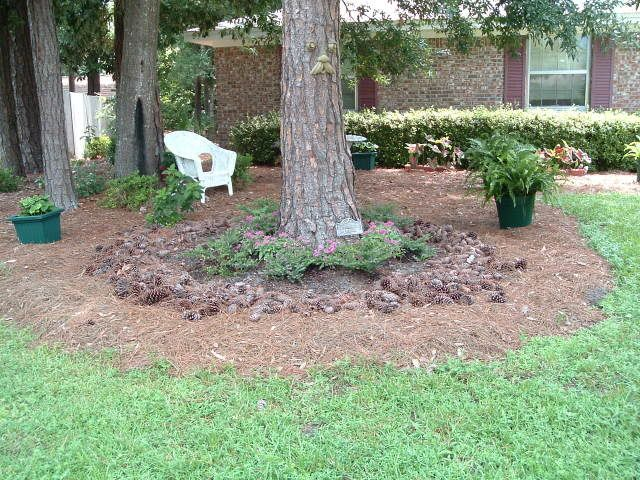 Ideas for landscaping under pine trees in the yard for for Tree landscaping ideas