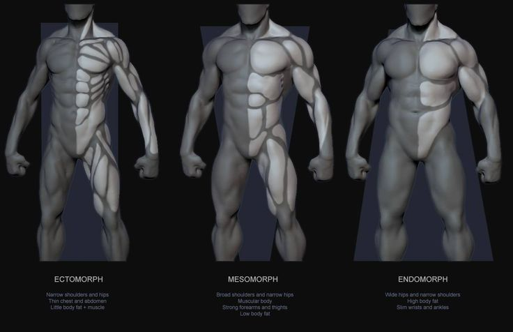 Muscle guide by Body Type |    Quick guide of muscles and proportions by body type.  The majority of people will probably fall into the category of a hybrid or mixed body type.