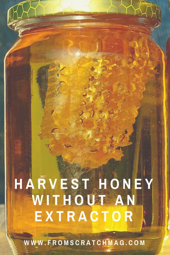 Harvest Honey Without an Extractor  http://www.fromscratchmag.com/harvest-honey-without-an-extractor/