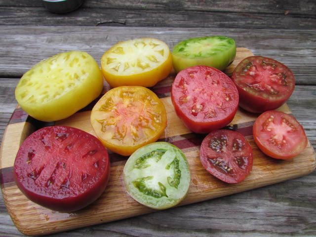 136 Best Images About Tomato Plant Varieties On Pinterest 640 x 480