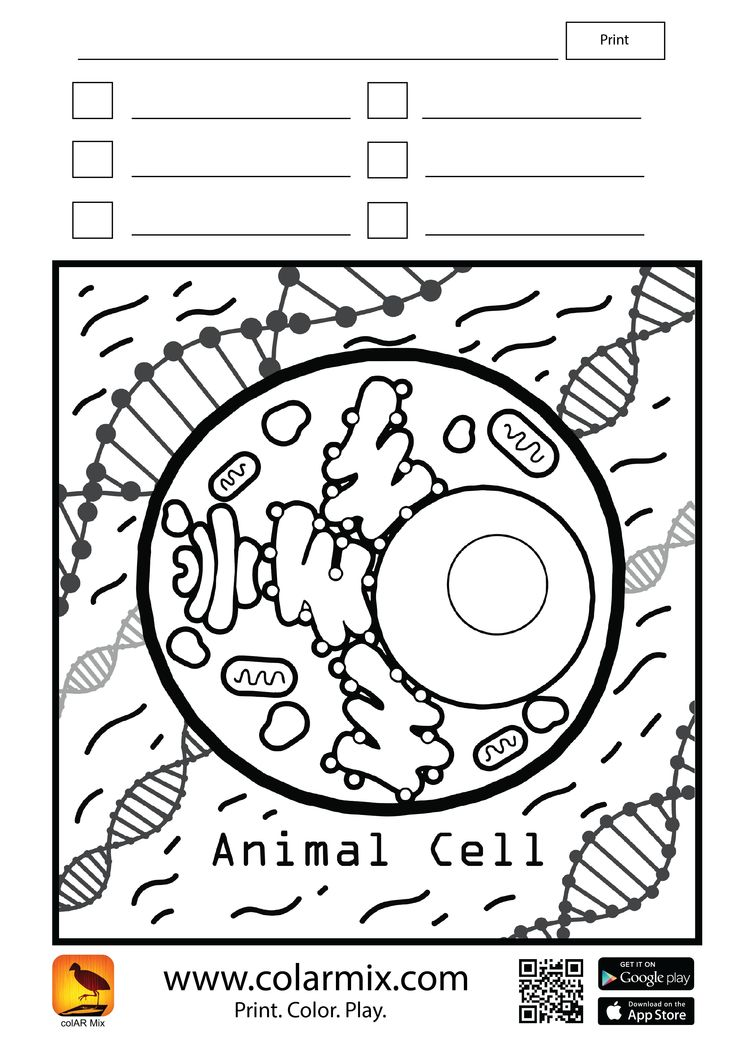 Photos To Coloring Pages App : Best images about science on pinterest space