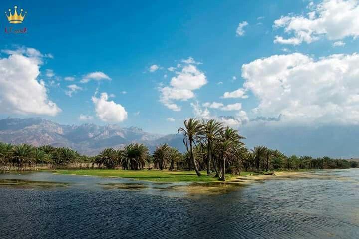 جزيرة سقطرى Socotra Instagram Yemen