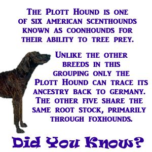 Plott Hound... that's my boy