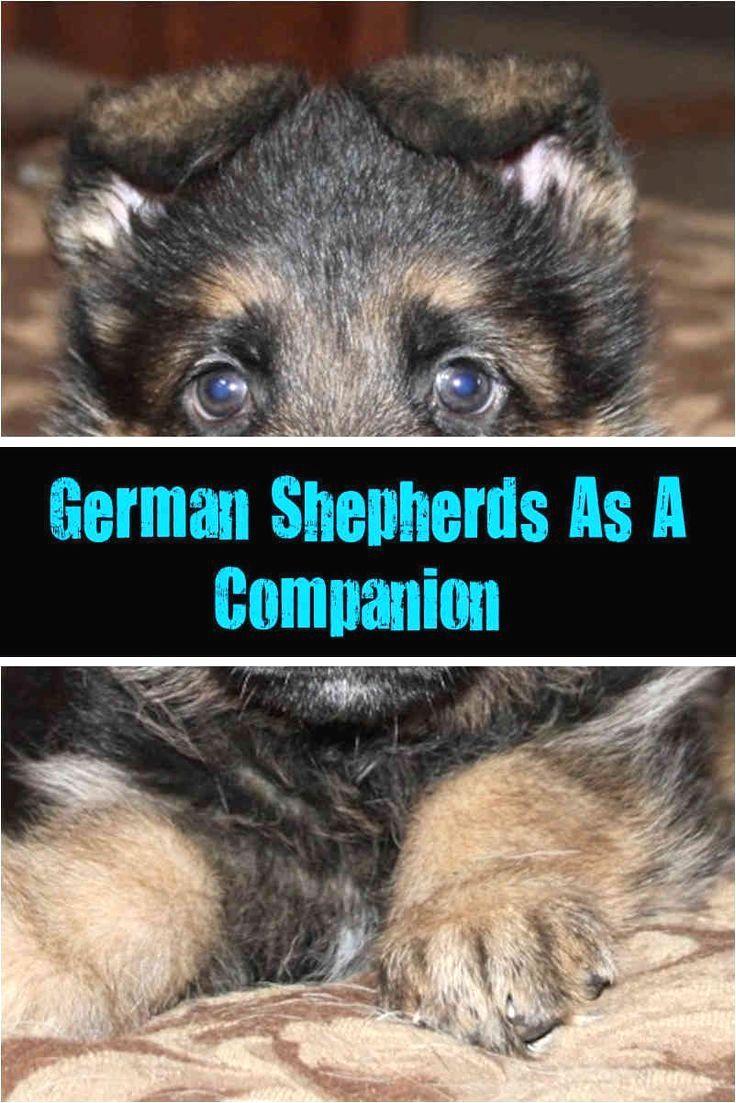 Pin By Dog Lover On German Shepherd German Shepherd German Shepherd Dogs German Shepherd Funny Quotes