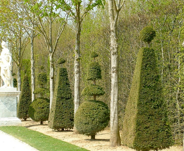 1000 ideas about jardin de versailles on pinterest for Jardin de versailles