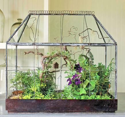 An antique terrarium becomes a stage for a miniature woodland garden, arbor and all. Ours has flowering Cape primrose, rabbit's-foot fern, golden club moss, black and dwarf mondo grasses, variegated ivy, angel's tears and Kenilworth ivy.
