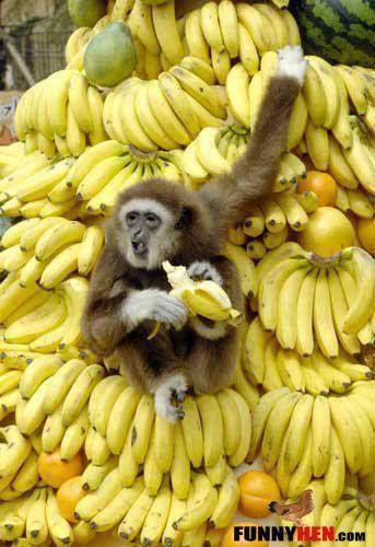 A monkeys heaven!