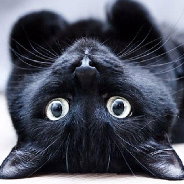 8 comportements de votre chat qui vous prouveront qu'il vous adore ! La 7 est…                                                                                                                                                                                 Plus