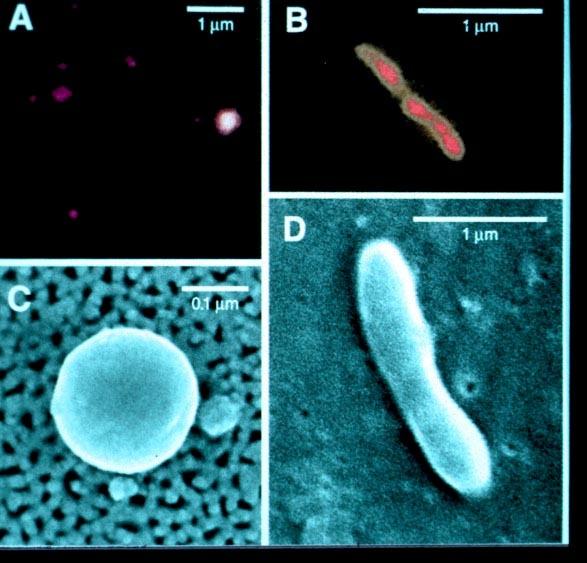 batteri scoperti in laghi glaciali sottratti a lungo dal contatto dell'aria