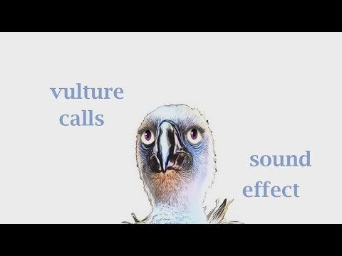 The Animal Sounds: Vulture Calls - Sound Effect - Animation