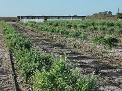 AGF0309 Citrus fruit, lucern, livestock, irrigation, chicken, beekeeping, braaihout smallholing