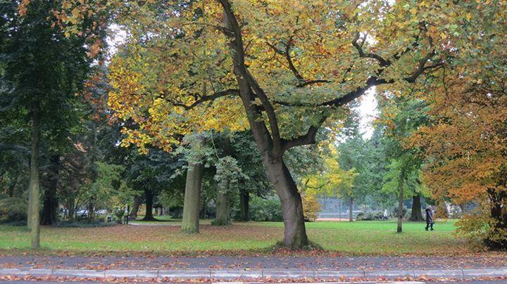 Autumn in Bonn-Bad Godesberg