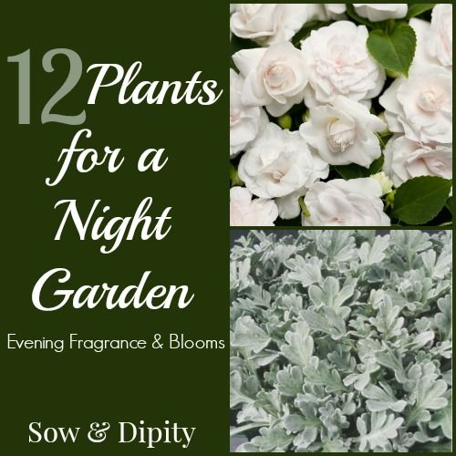 Night Garden Plants, perfect for small space gardens and patios!