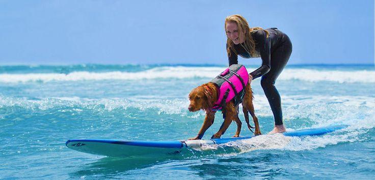 El perro de terapia que aprendió a surfear - http://www.mundoperros.es/el-perro-de-terapia-que-aprendio-a-surfear/