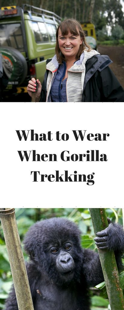 What to Wear When Gorilla Trekking www.minitravellers.co.uk Use a small backpack as it is useful to carry your water, packed lunch, camera and binoculars. I'll used the Dublin Backpack from Helly Hansen big enough, but light with useful pockets. Hiking boots/strong waterproof walking boots.  The ground is uneven so shoes with good ankle support. Light jumper and light rain poncho as the temperature is variable and weather conditions can change Long wool socks designed for a mountain…