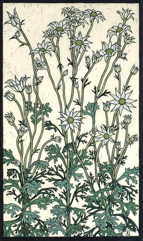 FLANNEL FLOWER 67 X 40 CM  EDITION OF 50 HAND COLOURED LINOCUT ON HANDMADE JAPANESE PAPER $1,250