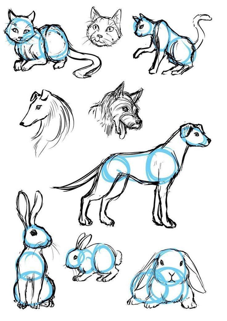 Картинки с животными которых можно срисовать
