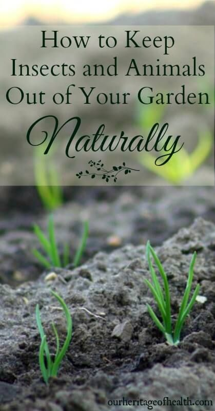 17 best ideas about garden insects on pinterest garden bugs insect pest and common garden weeds - Garden ideas to keep animals out ...