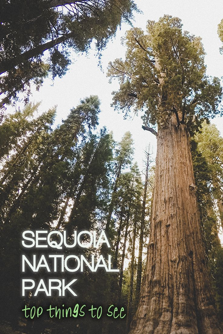 What makes sequoias in the park so special? Our guide will help you decide what to see in Sequoia National Park, US.