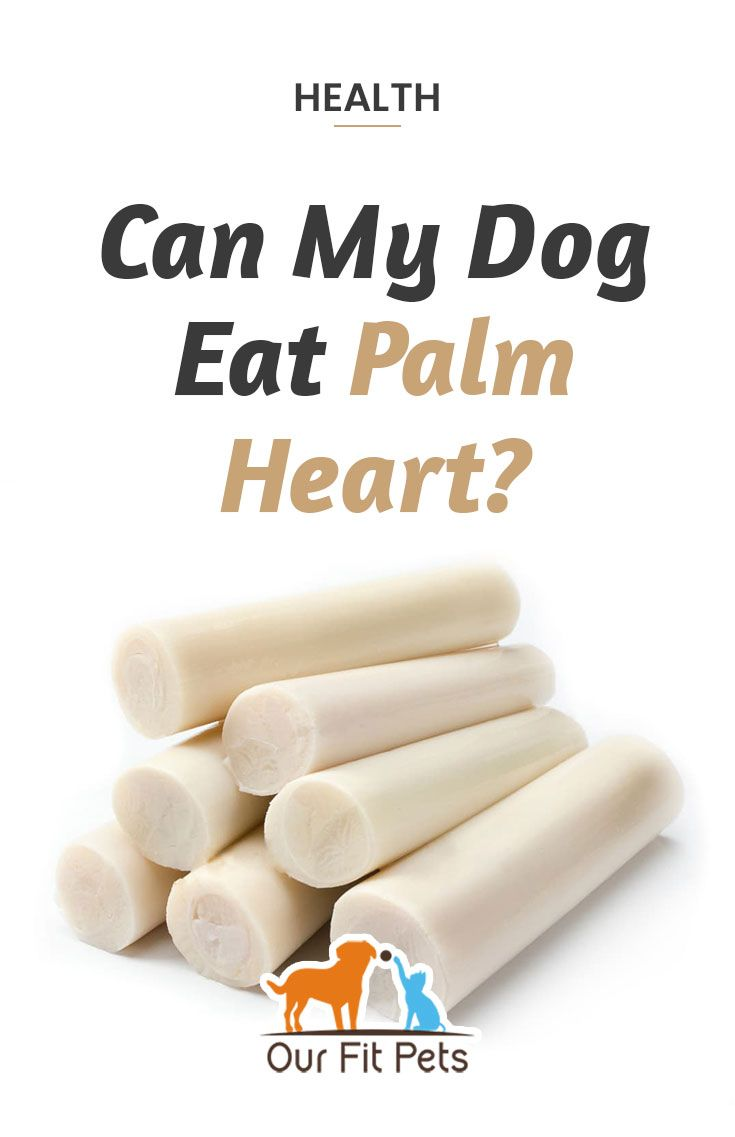 Can My Dog Eat Palm Heart Dog Eating Heart Of Palm Eat