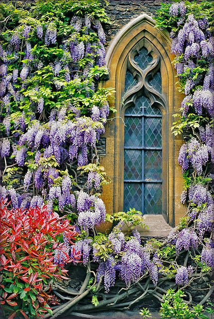 Wonderful window framed with wisteria