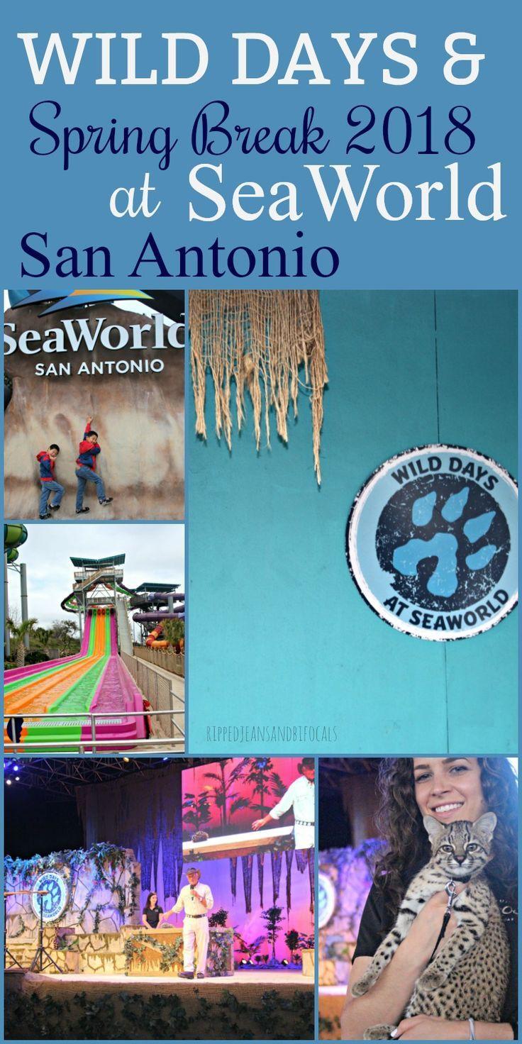 Visit SeaWorld San Antonio this spring break! #SeaWorld #SeaWorldSanAntonio #JackHanna #WildDays #FamilyFun Family fun in Texas|Family Fun in San Antonio|Things to do with Kids in San Antonio|San Antonio vacation ideas|Fun in Texas|Fun in San Antonio|Kids educational activities in San Antonio|