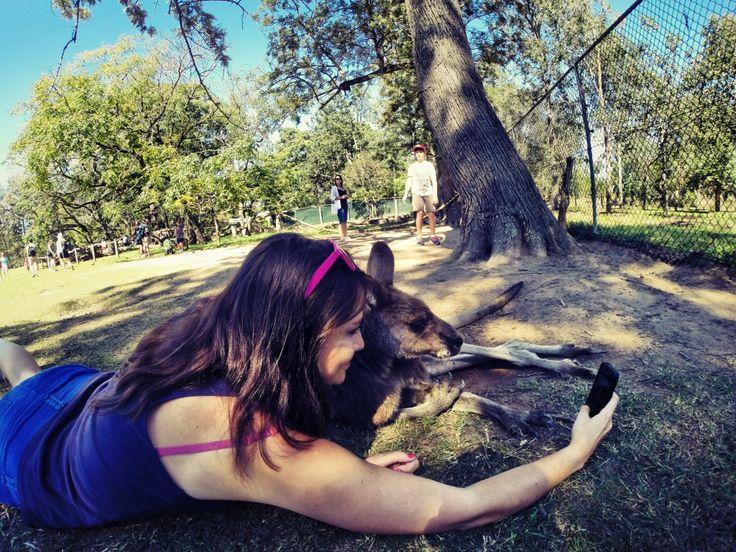 Selfie Kangourou - Australie Australia - http://breakinggood.fr/