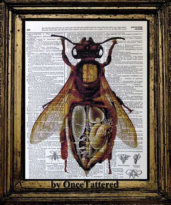 Anatomical Diagrams are a huge weakness of mine, PLUS bees? Be still my heart.
