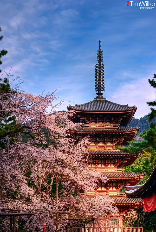 Daigo-ji Pagoda  #kyoto #japan