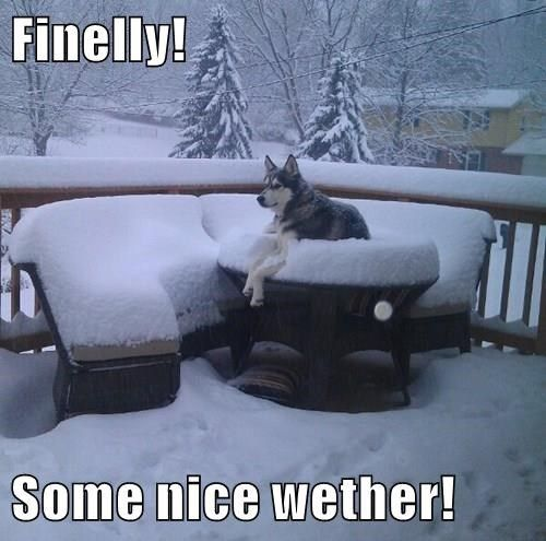 They are winter dogs people! My husky is a true Canadian!