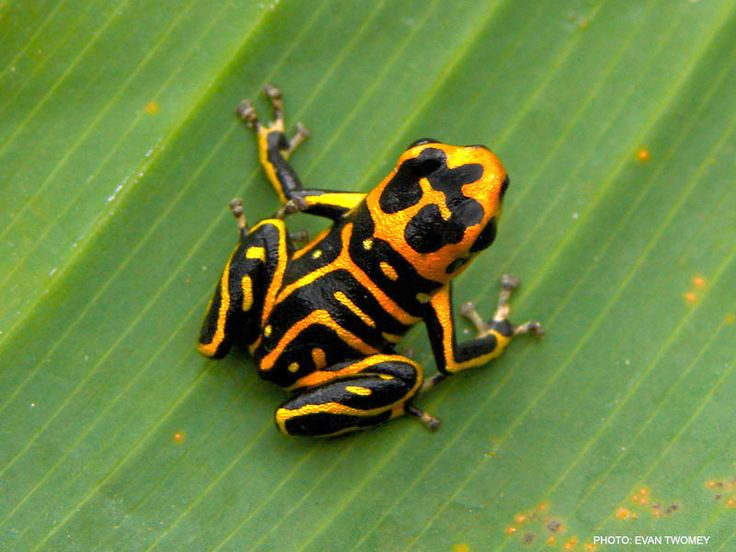 poison dart frog oh my gosh i am going crazy about this frog so cute!!!!!!!!!!!!!!!!!!!!!!!!!!!!!!!!!!!!!!!!!!!!!!!!!!!!!!!!!!!!!!!!!!!!!!!!!!!!!!!!!!!!!!!!!!!!!!!!!!!!!!!!!!!!!!!!!!!!!!!!!!!!!!!!!!!!!!!!!!!!!!!!!!!!!!!!!!!!