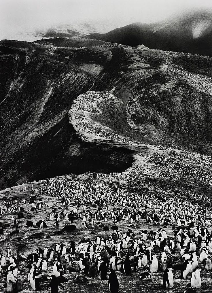 Deception Island, Antarctica. Photo by Sebastiao Salgado. 2005.
