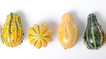 gourd1.png (450×250)