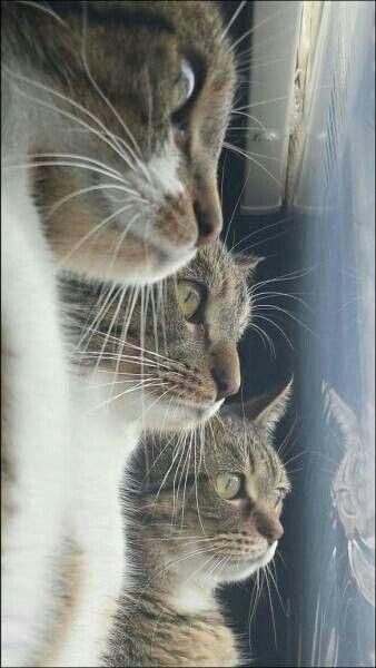 Gatos copuchentos