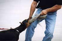 Ofert dresaj canin - G. Cocu
