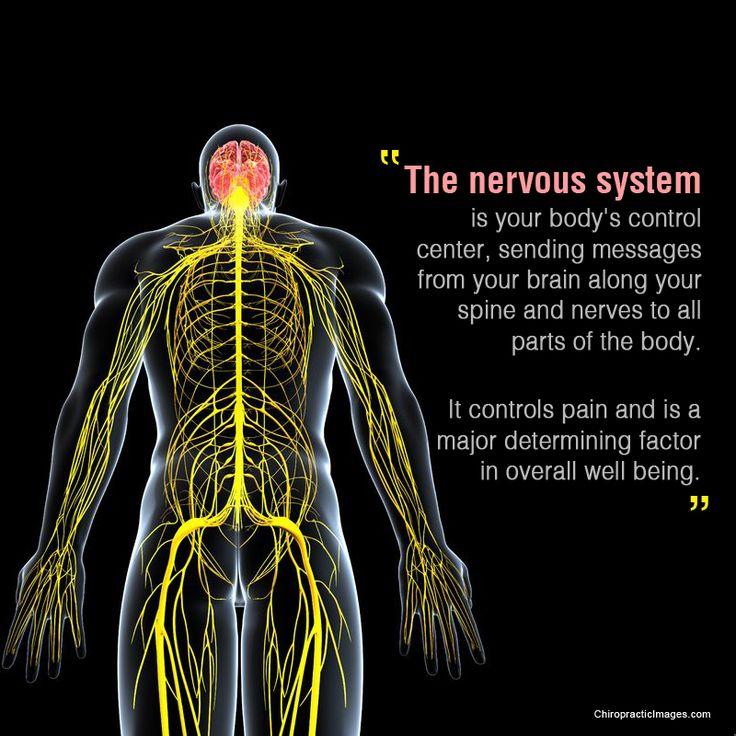 56 best Nerves images on Pinterest | Nervous system, Physical ...