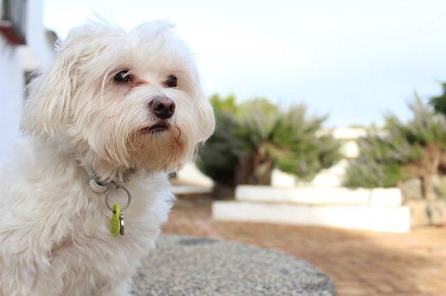 Con Perros y a lo loco | Vida perruna | Dogs & Lifestyle: No son una moda