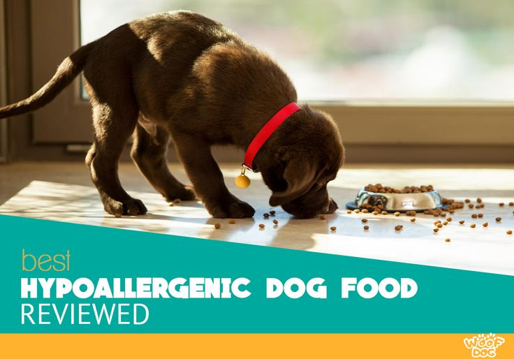 Your puppy coughing and wheezing from allergies? Here is our list of top 5 Best Hypoallergenic Dog Foods for 2017 which are also tasty and healthy.