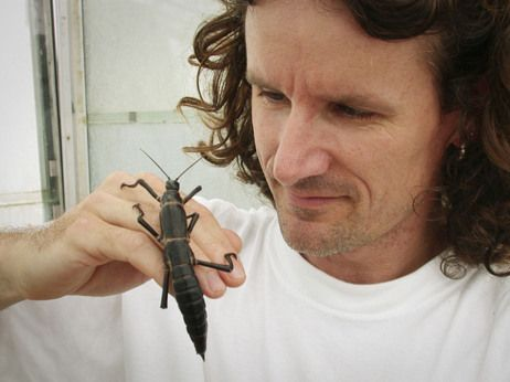 Nick Carlile, seen here with the Lord Howe Island stick insect (also called a Tree Lobster), discovered the thought-to-be extinct phasmid in 2001 on Ball's Pyramid.  The last sighting of this critter was in 1920 when a ship ran aground on Lord Howe Island and the rats found a favourite food to munch on -- the tree lobsters.  This last population was found on a neighboring rock, with the entire world population living around one sole bush.