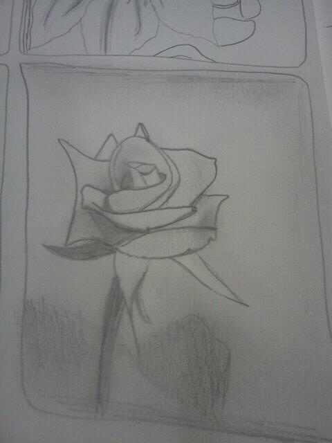 i sketched this rose along with many others