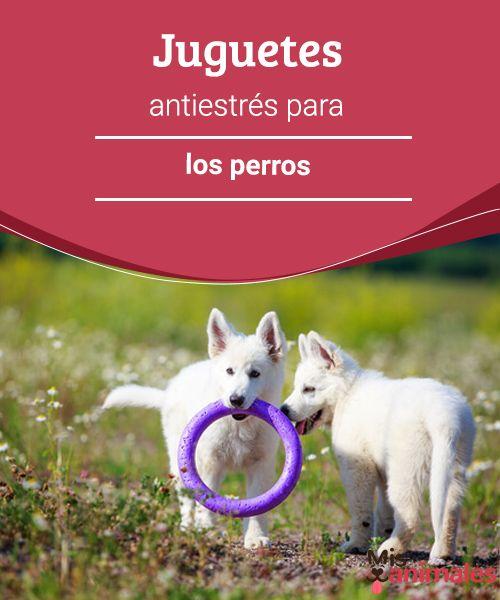 Juguetes antiestrés para los perros  ¿Cuáles son los mejores juguetes antiestrés para los perros? Mejor será que le consigas una gran batería de juguetes para contribuir a aliviar sus tensiones. #juguetes #estrés #mascota #consejos