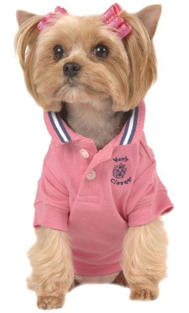 Small Dog Polo Style Dog Shirts By Maxu0027s Closet