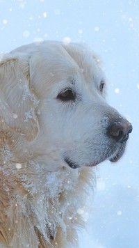 Pies uwielbiający śnieg