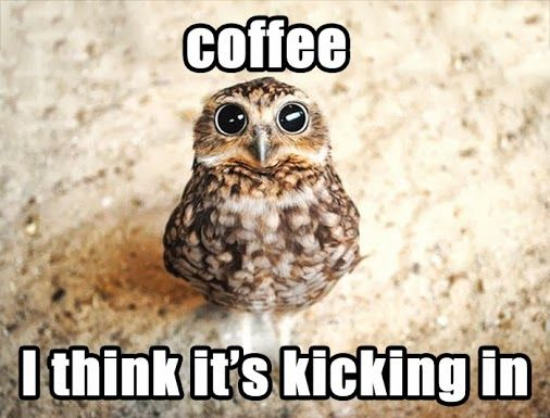 so cute ! and probably pretty close to what I look like when I drink coffee..