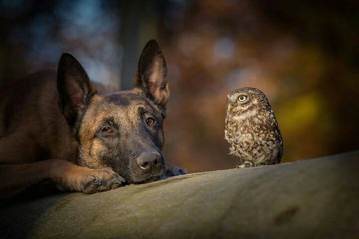 Dog and owl