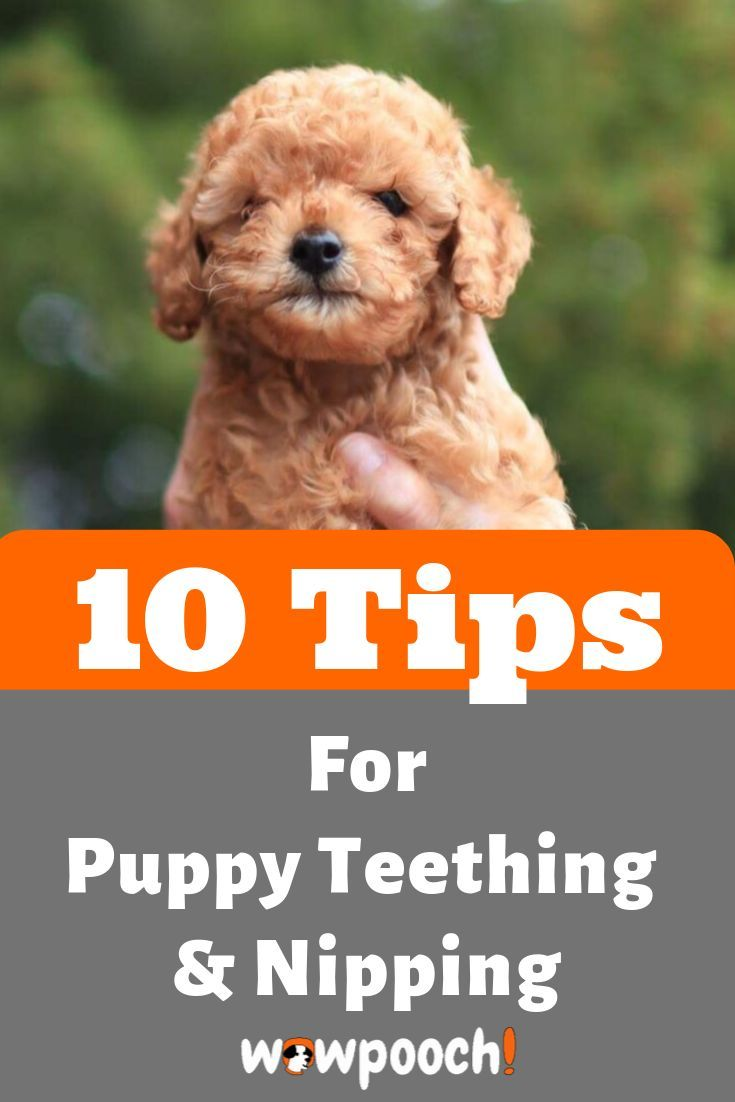 Pin On Puppy Training Commands Teaching