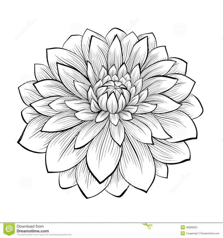 11 Gorgeous Ͽ� Black� Blooms: Beautiful Monochrome Black And White Dahlia Flower