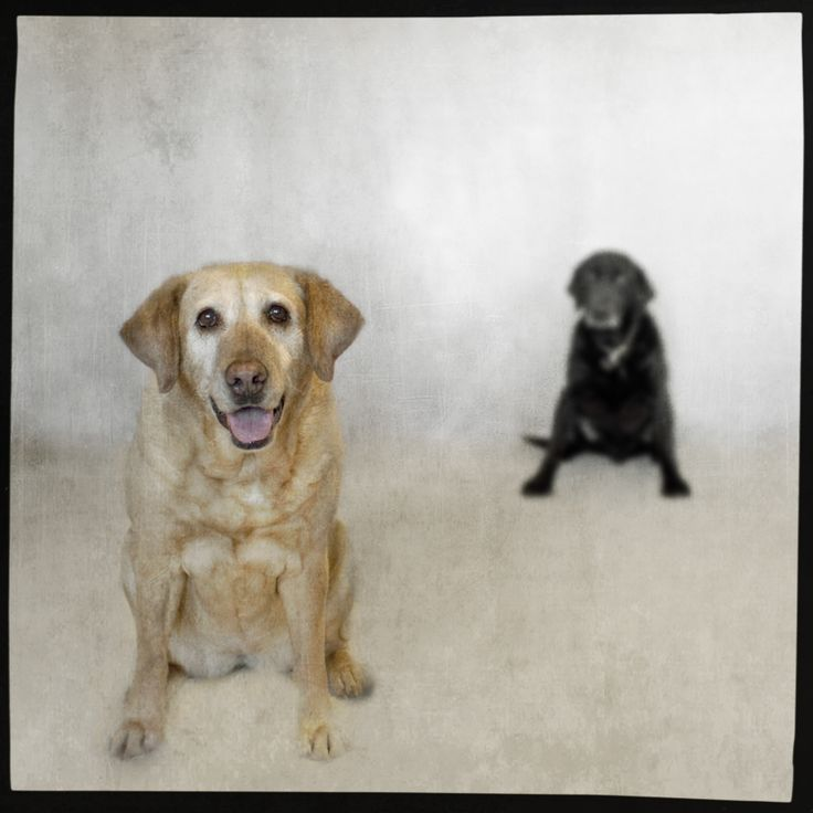 These look JUST like my dogs!!  me and my shadow copy From Jamie Heiden Photography